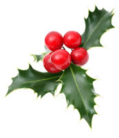 Seasons Greetings from Menzies Law - Holly with berries